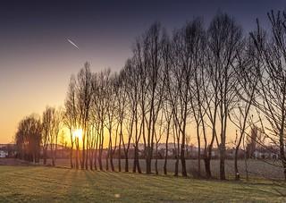 Alberi trafitti al tramonto