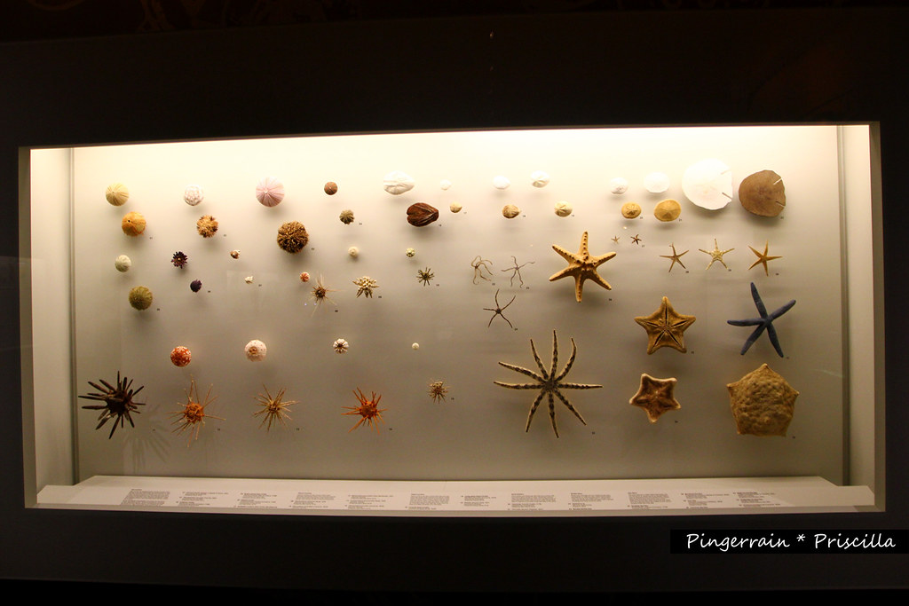 Sea stars and urchins