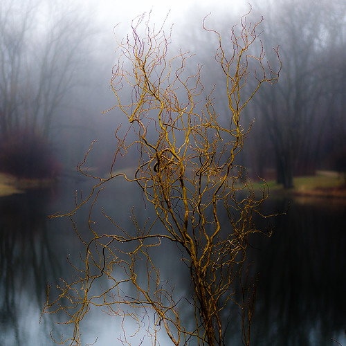trees light mist abstract blur reflection wet water misty fog forest square landscape droplets spring still pond woods nikon quiet dof natural branches foggy waterdrops stillness d5000 captaindanielwrightwoods noahbw