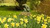 20150412-H_Monks Kirby Daffodil Festival 2015_Cheetah Sculpture