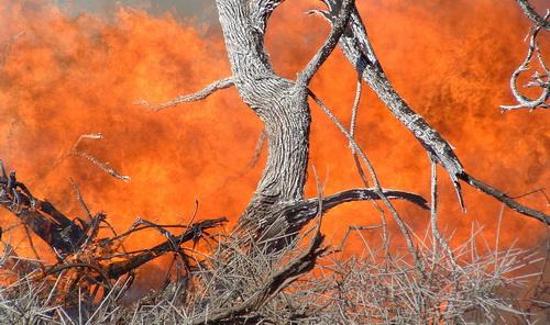 火燒森林是大豆種植的常見方式。