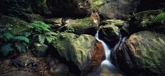 Jamison Creek Jumble