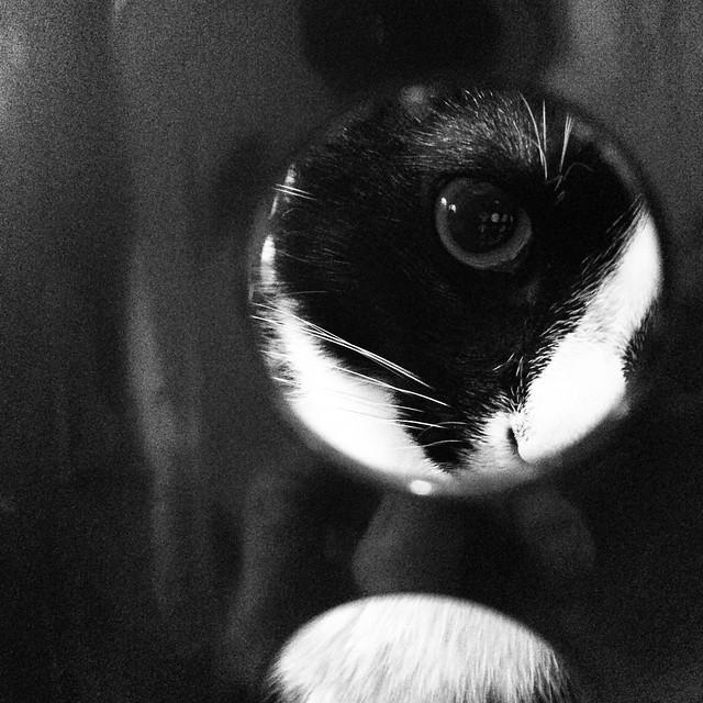 Piglet #laundryday #helpingwithchores #laundry #cats #tuxedocat
