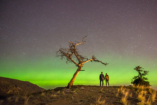 Northern lights at rooster tree