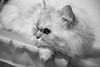 Marcello in black & white mood