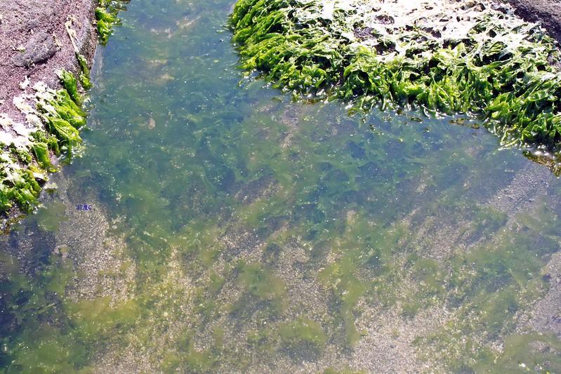 17度C台二線景點-石門-老梅綠石槽 (29)