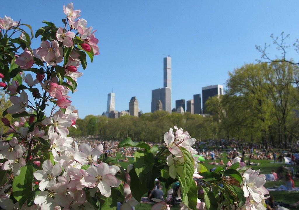 Central Park en Primavera