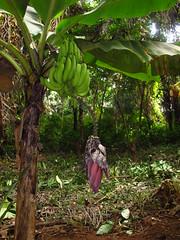 Banana Island Sierra Leone West Africa Afrika West…
