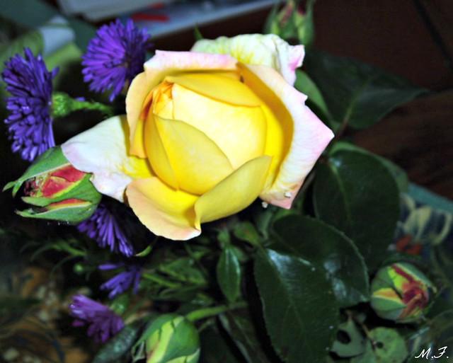 bleu jaune rose