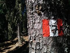 Wegmarkierung 7A im Wald