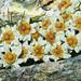 Southern edelweiss (Leucogenes grandiceps) - gracious little gem by Cristina Estima