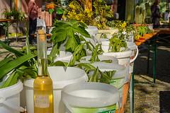 Neumarkter Pflanzentauschmarkt 2016