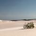 Lençóis Maranhenses - dunes/dryness - Maranhão/Brazil
