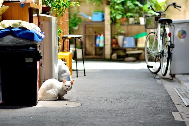 小路にたたずむネコの写真