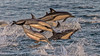 Long-beaked Common Dolphins by bfryxell