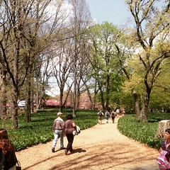 It was a beau-tiful day at the Brooklyn Botanical Gardens yesterday. To bad the bluebell field wasn't blooming yet.