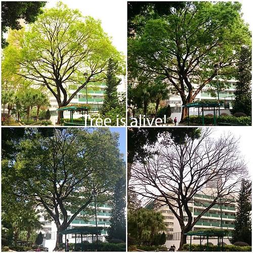 Tree (13)