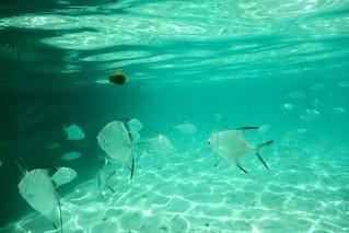 St Maarten 2015