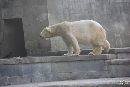 Zoo Rostock 11.04.20151