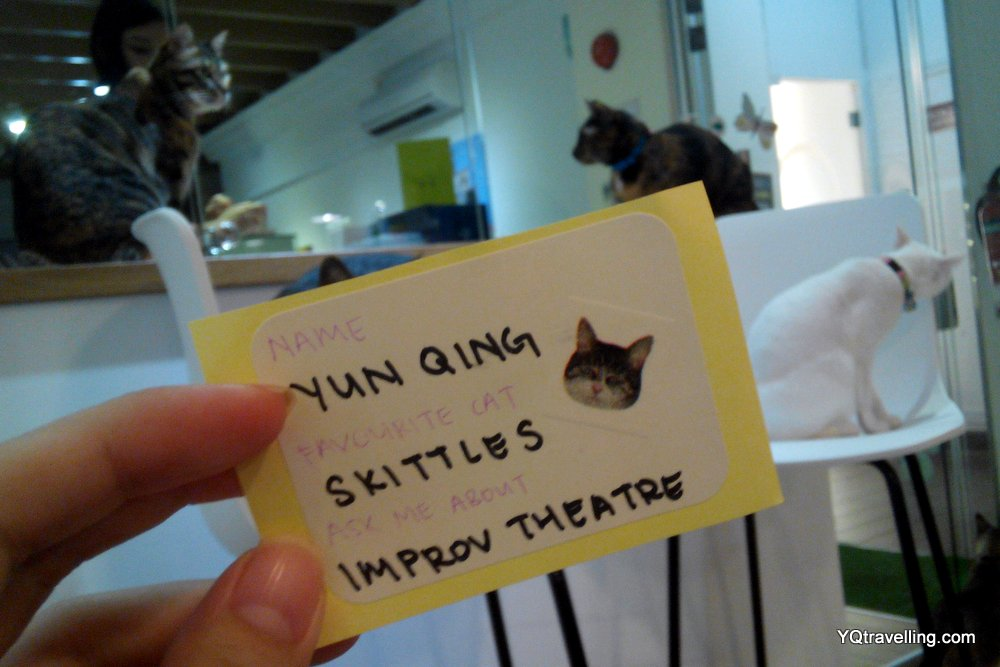 Cat cafe Neko no Niwa #meetmeowmingle