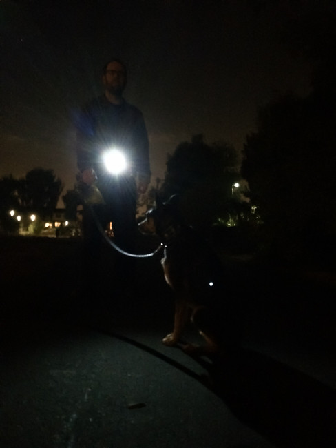 Walking a dog with the GoMotion LiteBelt