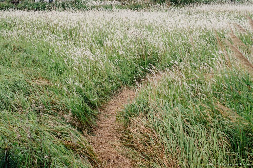 Untitled 白茅草 踩單車就是可以找到這樣的仙境﹣白茅草失樂園 17098641748 6a8dc501c7 o