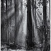 Light & Trees, Large Format 4x5 by Made in England68