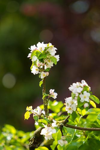 The last blossom, still holding on