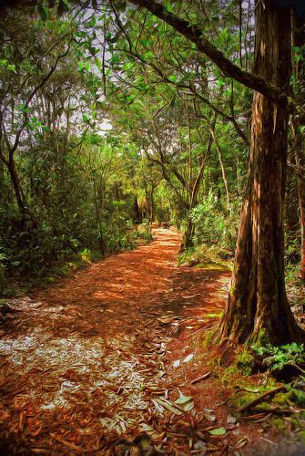 parque naturaleza hojas nikon camino selva bosque medellin sendero antioquia secas arví