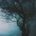 Dark Valley- Psalms 23 (Explore #20 02.05.2015) by roizroiz