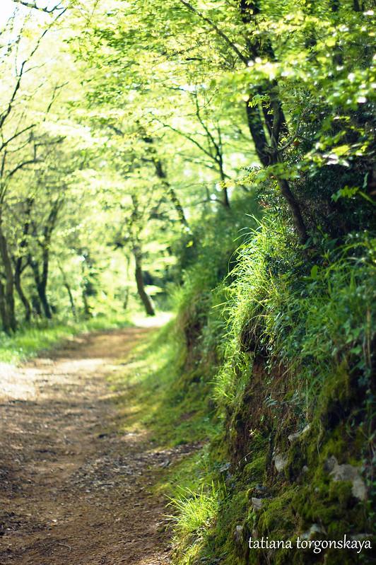 Пейзаж в весенней дубраве
