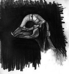 mummified fetal pig sketch