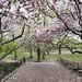 Magnolia Trees by Joe Josephs: 2,000,939 views - thank you