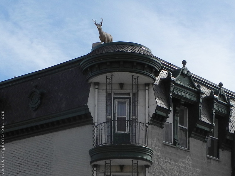 Deer on rooftop Ste-Catherine east 16