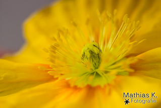 Blüte ganz Nah