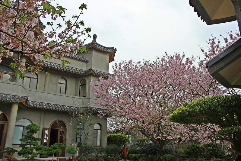 17度C在地景點春季推薦-東方室-櫻花 (11)