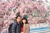 Photo:IMG_0078 枝垂桜 By vicjuan
