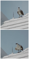 Turks & Caicos Island Bird