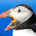 Puffin 'Yawn' by Beckles Creations