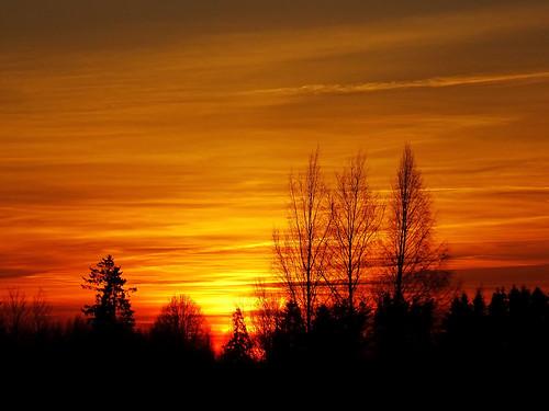 trees sunset sky orange nature silhouette yellow landscape branch sony shades latvia lettland aluksne latvija daba lettonie dzeltens debesis saulriets alūksne hx400v