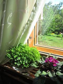 On my window