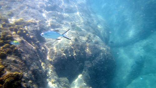 Koh Samui Snorkel