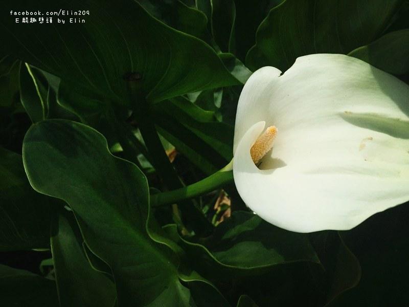 陽海 (14)