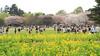 Photo:IMG_1075 国営昭和記念公園 花畑 By vicjuan