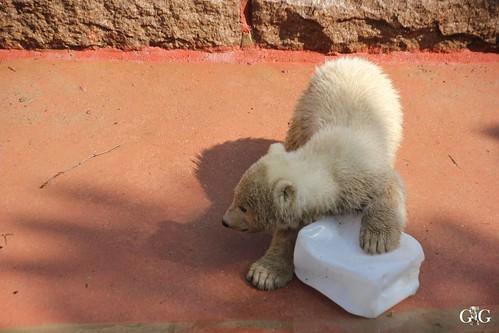 Zoo Rostock 11.04.201547