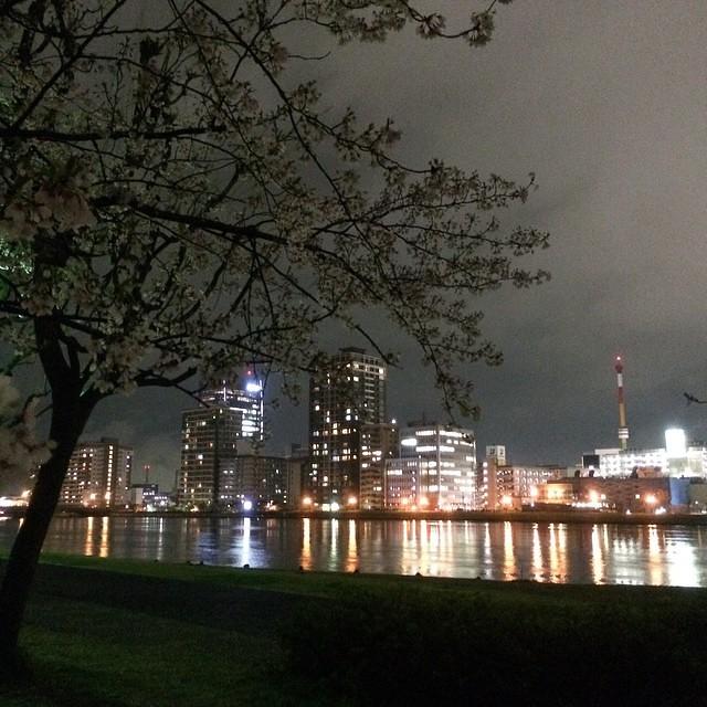 Photo:#桜 #やすらぎ堤 #万代シテイ 桜、ボリュームが無くなってなんだかさみしいなぁ。 By yoruwo
