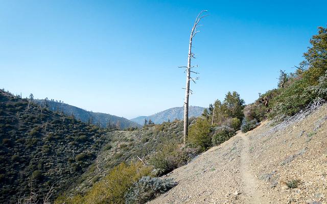 Hillside trail, m356