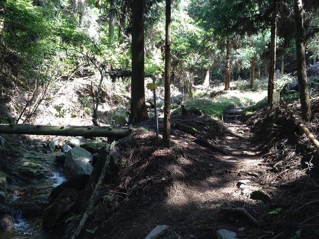 錫杖ヶ岳 加太コース 鉄塔巡視路分岐