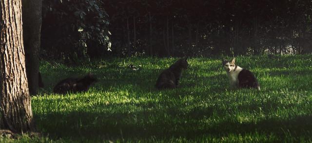 Gatos en Parque Retiro, Madrid (2016)