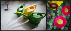 Pinhole Day Diptych - Watering Cans and Flowers